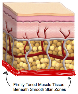 firmly toned muscle tissue beneath smooth skin zones